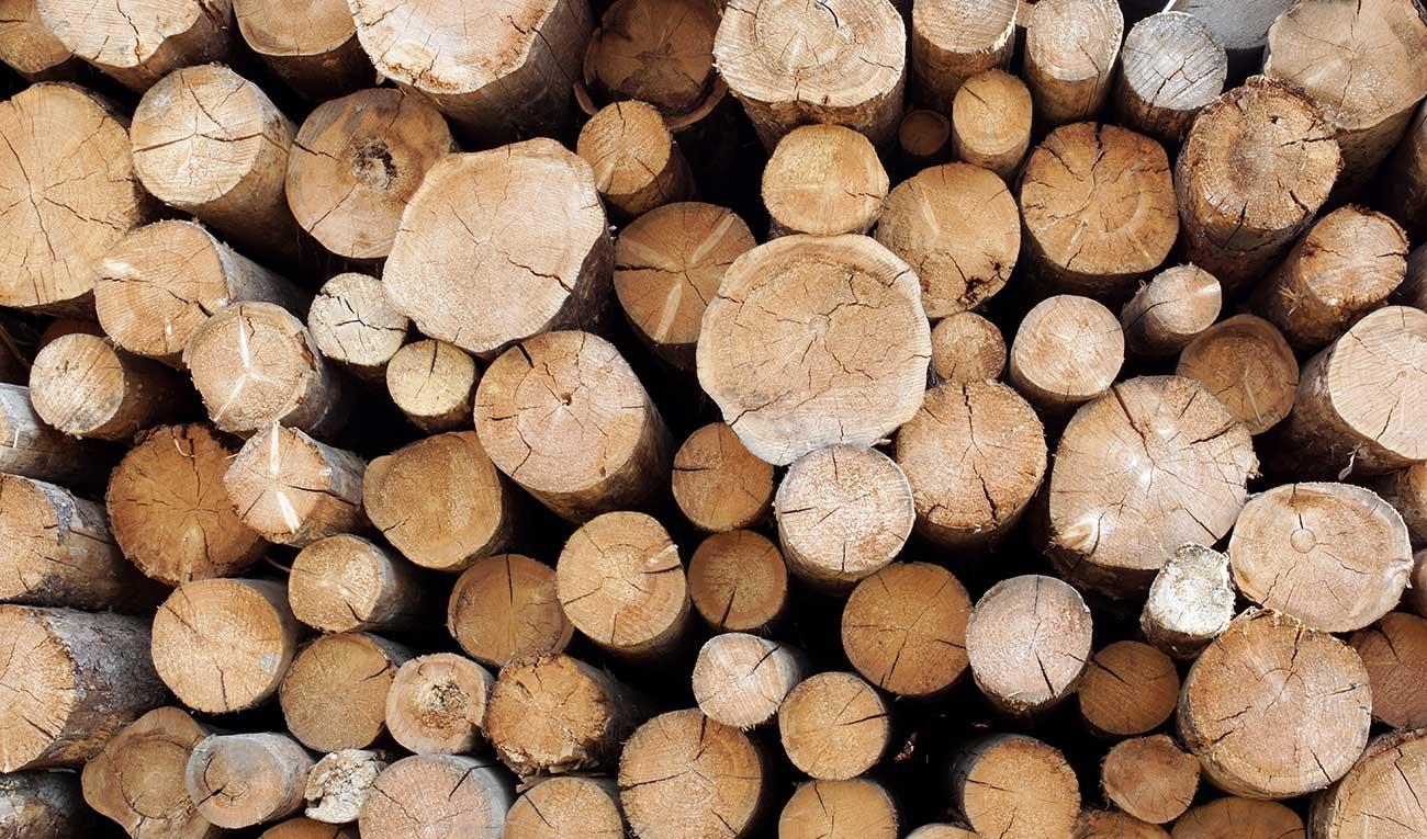 Soft Wood Examples Steelport Maastricht
